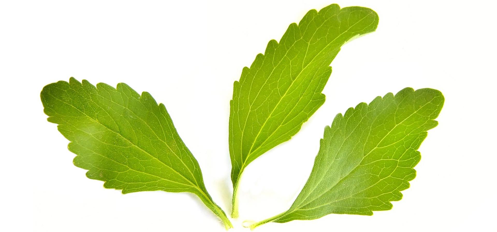 ist stevia eine sichere alternative zu zucker w hrend der. Black Bedroom Furniture Sets. Home Design Ideas
